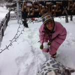 Ania vs. Snow leopard