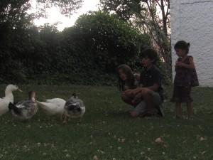 En el Jardín de la Leyenda alimentando a los, ya bastante alimentados, patos